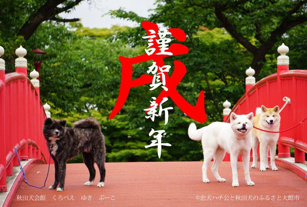 秋田犬画像